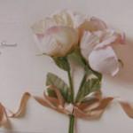 100905-rose