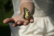 Un lâcher de papillon à la sortie de l'Eglise ou de la mairie ?